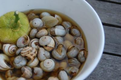 escargots marocaine