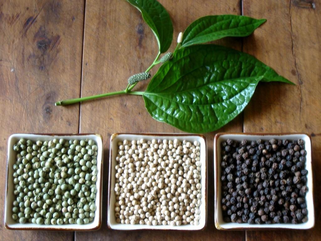 Перец черный горький горошком выращивание 72