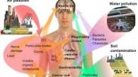Ce qu'on mangea une grande influence surnotre corps et cerveau, d'où l'importance de manger sainement. Si on se concentre uniquement sur l'alimentation, les graisses saturés (beurre, crème, charcuterie…les graisses d'origine […]